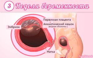 3 неделя беременности: причины, симптомы, фото, узи