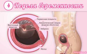 4 неделя беременности: признаки, симптомы, ощущения, фото, узи, выделения, развитие плода
