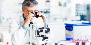 Норма и анализ крови на ХГЧ при беременности