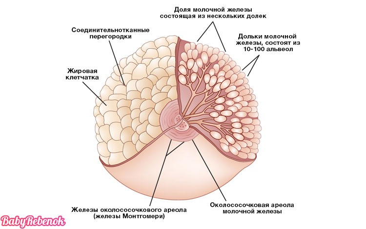 Лактостаз у кормящей мамы: причины, симптомы, лечение, массаж