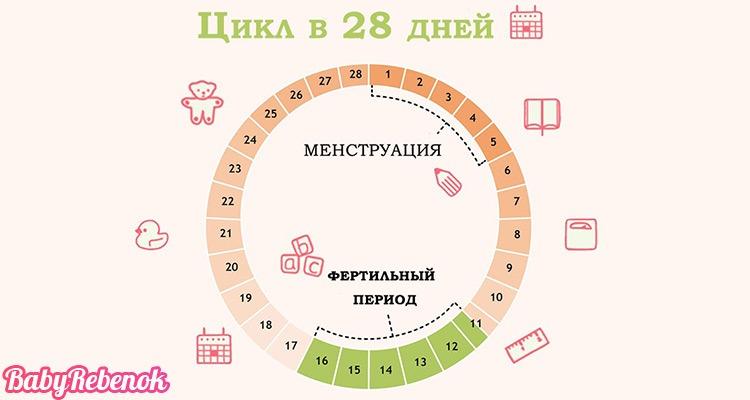 Сколько дней длится овуляция и как определить день овуляции