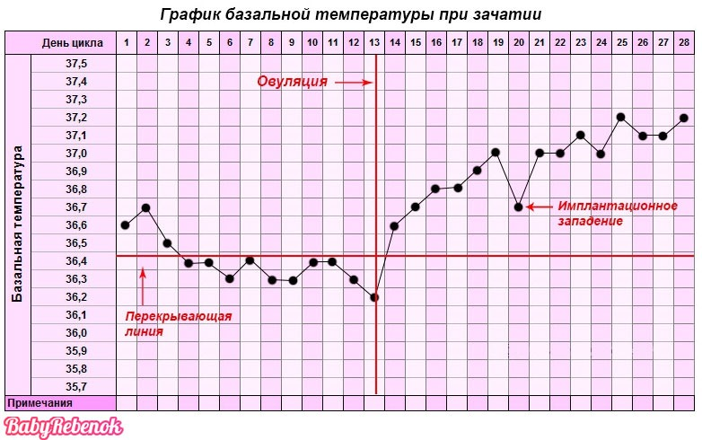 Как определить беременность на ранних сроках. – 5 методик