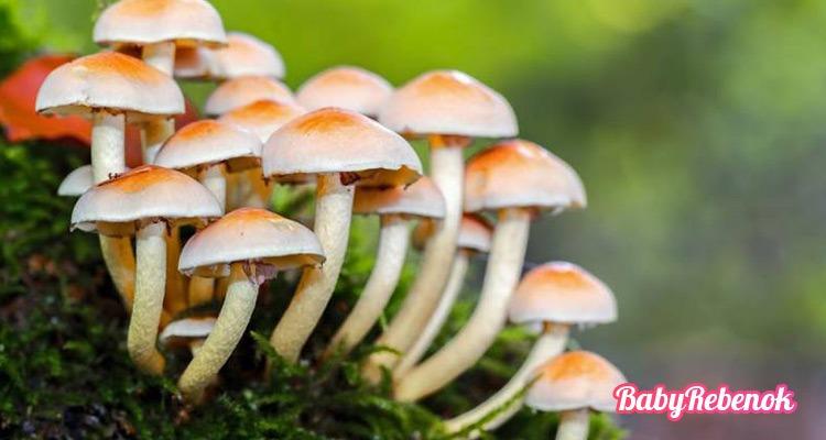 Можно ли есть грибы беременным: жаренные, маринованные